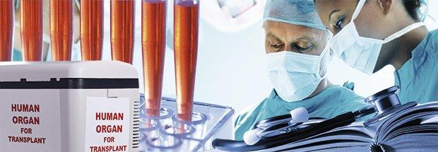 Mediziner mit Laborgeräten und Organ-Transportbox